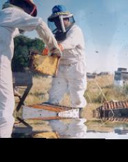 Durante abril se inscribe para uso de Sala de Extracción de Miel