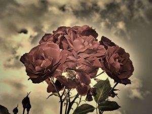 granja las rosas y antonio v. bonilla